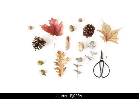 Autumn botanical floral composition. Maple, oak and dry eucalyptus leaves pattern with pine cones, nuts and black vintage siccors on white table background. Styled stock photo. Flat lay, top view. - Stock Photo
