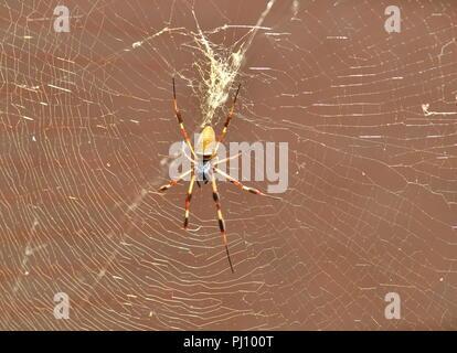 Golden Silk Orbweaver Spider (Nephila Clavipes) - Stock Photo