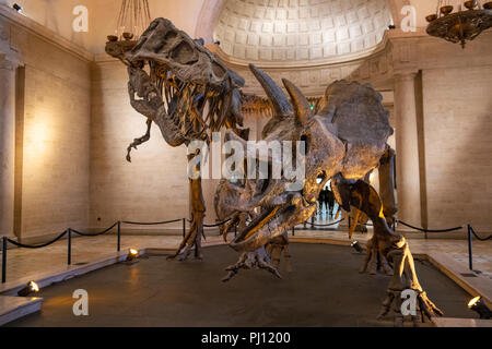 The Natural History Museum of Los Angeles County is the largest natural and historical museum in the western United States. Its collections include ne - Stock Photo