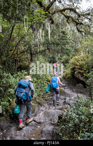 Rocky trail in the forest on the way to Soi Thangthangkha, Paro District, Snowman Trek, Bhutan - Stock Photo