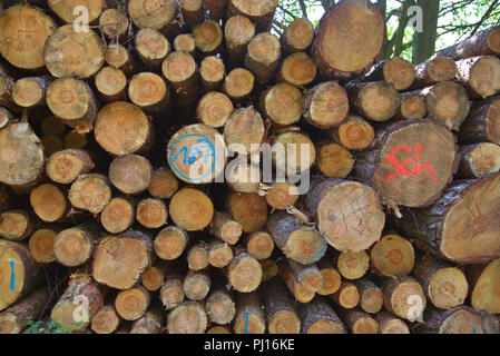 Cut surfaces of stacked tree trunks. - Stock Photo