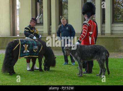 Maskottchen der Irish Guards Irish Wolfshound, Shetland pony Cruachan IV, Mascottchen Royal Regiment of Scotland, Buckingham Palace, London, England,  - Stock Photo