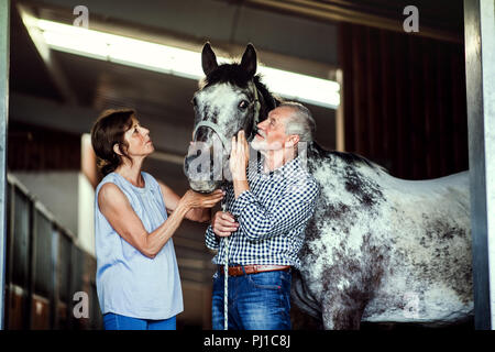 A senior couple petting a horse in a stable. - Stock Photo