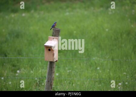 bird in bird house on fence - Stock Photo