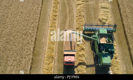 Combine harvester at work harvesting field wheat. Aerial view Combine harvester mows ripe spikelets, barley, rye. Combine harvester harvest ripe wheat on a farm. - Stock Photo