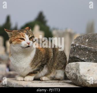 Cat in Ephesus Ancient City, Selcuk İzmir/Turkey - Stock Photo