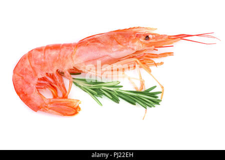 Red cooked prawn or shrimp with rosemary isolated on white background. Top view. - Stock Photo