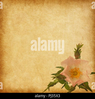 old paper textures with rose (Rosa canina) - Stock Photo