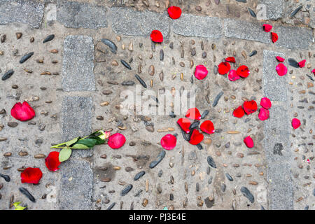 Rose petals lying on the floor. - Stock Photo