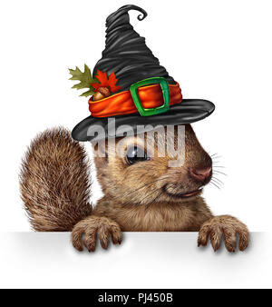 Halloween celebration squirrel blank sign concept as cute happy wildlife wearing a spooky witch hat holding a blank sign as a festive fall. - Stock Photo