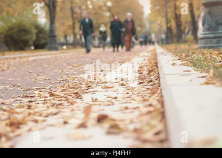 Silhouettes of unrecognizable people , walk in the autumn city on the fallen leaves, pavement with dry foliage, blurred bacground