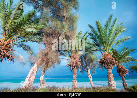 Dead Sea shore. Palm trees on the beach. Ein Bokek, Israel - Stock Photo