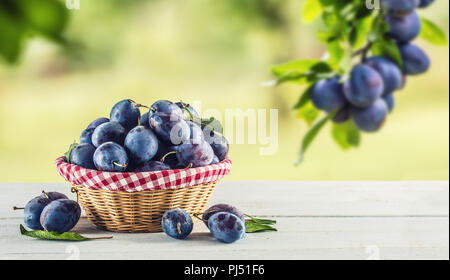 Sweet ripe plums in basket on garden table. - Stock Photo