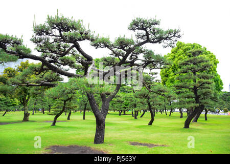 A park full with green trees in front of Imperial Palace, Tokyo, Japan - Stock Photo