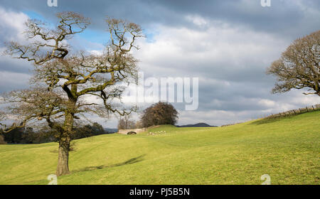 Abandoned northern reaches of the Lancaster Canal near Sedgwick, Cumbria, UK - Stock Photo
