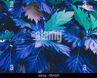 Blue, purple and green leaves background in exotic color style. - Stock Photo