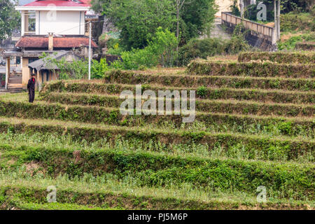 Ha Giang, Vietnam - March 18, 2018: Farmer walking through a terraced rice field in a remote village of northern Vietnam - Stock Photo