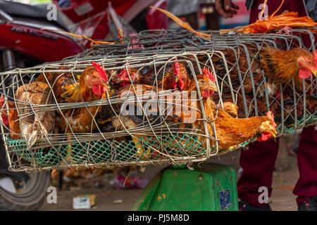 Dong Van, Vietnam - March 18, 2018: Chicken in hauls on sale at Dong Van sunday market - Stock Photo