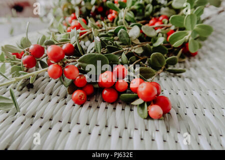 Red Lingonberry in the forest. Cowberry eurasian flora, forest lingonberry. - Stock Photo