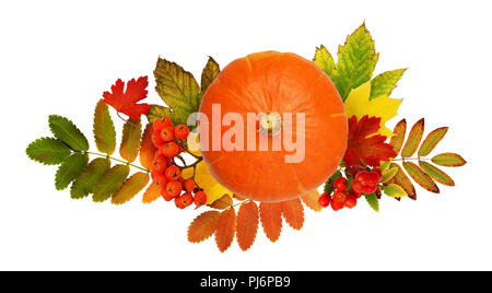 Round pumpkin, rowanberries and autumn colorful leaves isolated on white background. Top view. Flat lay. Halloween arrangement. - Stock Photo