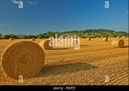 Warwickshire landscape with round straw bales in fields after harvesting. - Stock Photo
