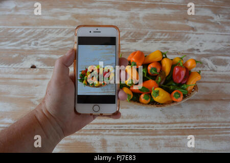 Woman taking a photo of a basket full of freshly picked red, green, yellow and orange peppers, using her smartphone camera, an iPhone7 - Stock Photo