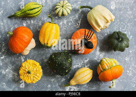 Harvest a variety of pumpkins and spiders on a gray background. Halloween. Top view - Stock Photo