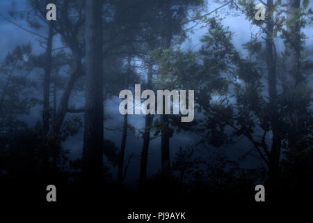 Foggy and dark woods at night or dusk against a cloudy sky - Stock Photo