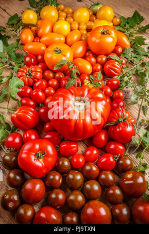 Assortment of colored fresh tomatoes - Stock Photo