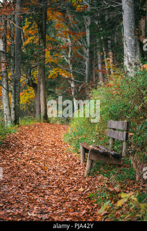 Autumn scenery with a wooden bench on the side of an alley covered with colorful fallen leaves, on an October morning, in Fussen, Bavaria, Germany. - Stock Photo