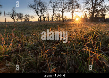 Landscape with an orchard with leafless trees, a meadow with dried and frozen grass, warmed by the December sunrise, near Schwabisch Hall, Germany. - Stock Photo