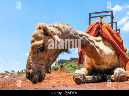 Nairobi, Kenya. 24th Mar, 2018. A camel seen chilling out during a warm sunny day.Kibera is one of Africa's largest Slums located in East Africa, Kenya. Credit: Donwilson Odhiambo/SOPA Images/ZUMA Wire/Alamy Live News - Stock Photo