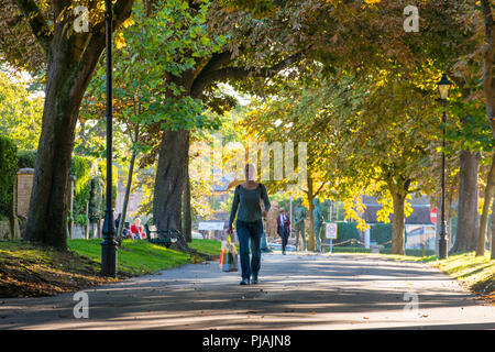 Dorchester, Dorset, UK.  6th September 2018.  UK Weather.  A woman walking through the avenue of Horse Chestnut trees at South Walks in Dorchester which are showing their autumn colours as the low morning sunshine highlights the golden leaves.  Picture Credit: Graham Hunt/Alamy Live News - Stock Photo