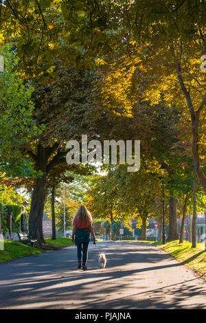 Dorchester, Dorset, UK.  6th September 2018.  UK Weather.  A woman with her dog walking through the avenue of Horse Chestnut trees at South Walks in Dorchester which are showing their autumn colours as the low morning sunshine highlights the golden leaves.  Picture Credit: Graham Hunt/Alamy Live News - Stock Photo