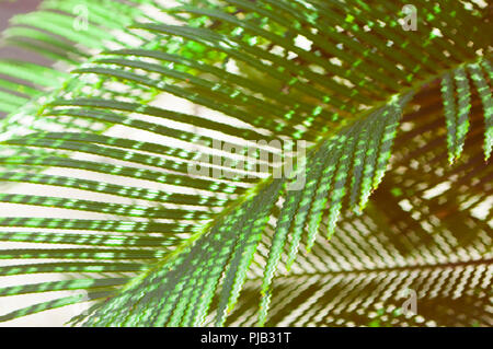 Fresh palm tree leaves with glitch effect. - Stock Photo