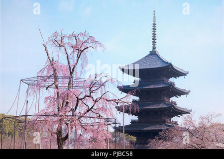 KYOTO, JAPAN - March 25, 2018: Weeping willow tree and cherry tree in bloom with five-story pagoda of Toji Temple in blue sky. - Stock Photo