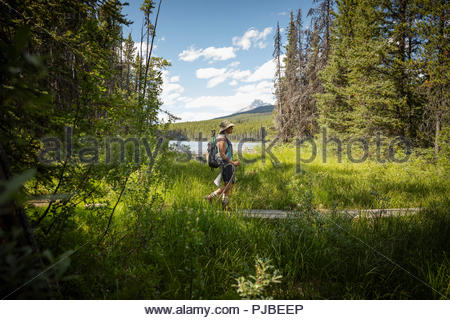 Mature woman backpacking, hiking in sunny forest, Alberta, Canada - Stock Photo