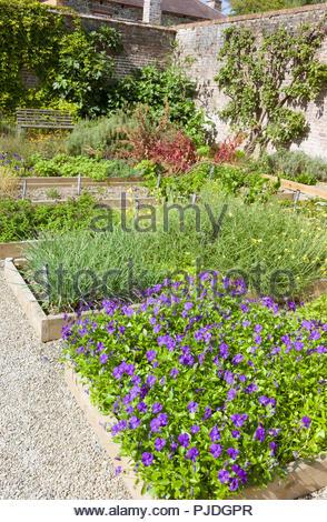 The herb garden borders in the walled kitchen garden at Llanerchaeron villa, Ceredigion, Wales, UK - Stock Photo