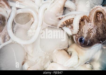 Fresh vat of squid at the morning market. Hanoi, Vietnam - Stock Photo