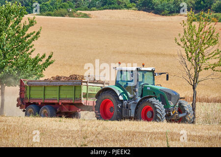 A farmers green tractor with red wheels framed between two trees driving through a wheat field pulling a trailer back to the shed. - Stock Photo
