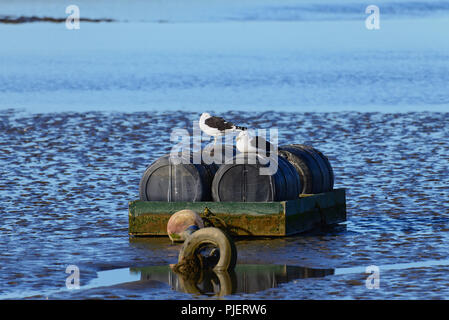 All at sea, seagulls resting on a platform in the sea - Stock Photo