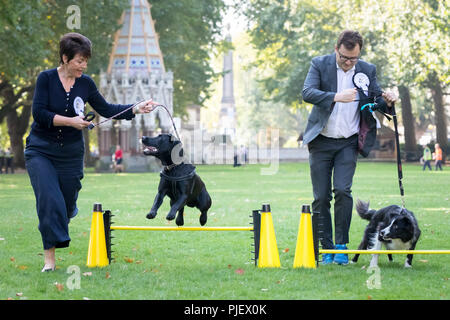 London, UK. 6th September, 2018. 26th Annual Westminster Dog of the Year. Credit: Guy Corbishley/Alamy Live News - Stock Photo