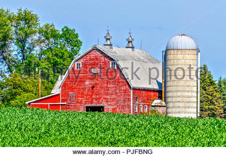 Red Barn and Silo Through a Crop of Green Summer Corn on a Central Minnesota Farm - Stock Photo