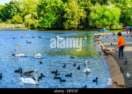 Boy in bright orange jacket feeding birds swimming in a pond in Regent's Park, London, England - Stock Photo