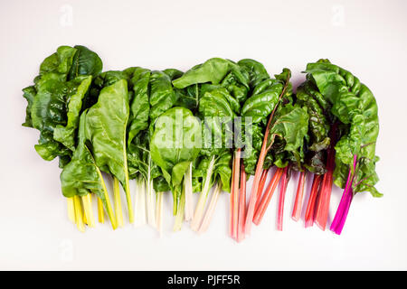 Food gradient of organic rainbow chard: spray-free leafy greens in linear arrangement isolated on white background - Stock Photo