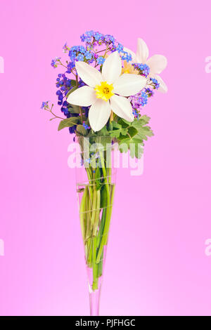An image of two white daffodil in a vase - Stock Photo