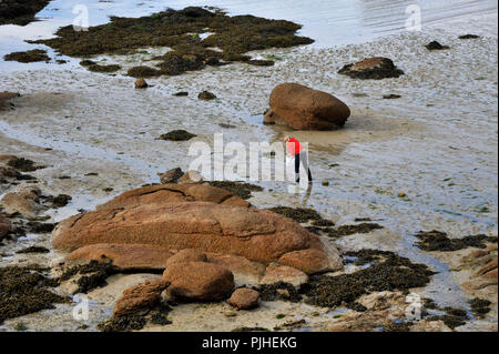 France, Brittany, Cotes-d'Armor department, Ploumanach rocks on the Pink Granite Coast in Perros-Guirec, shellfish in the bay of Saint Guirec. - Stock Photo