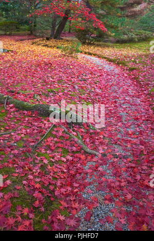 Japan, northeastern area of Kyoto, autumn maple leaves covering a gravel footpath through the grounds at Shugakuin Imperial Villa - Stock Photo
