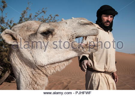 Morocco, Western Sahara, camel driver with his camel in the Saharian desert - Stock Photo