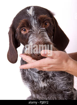 male owner feeding dog with hands - Stock Photo